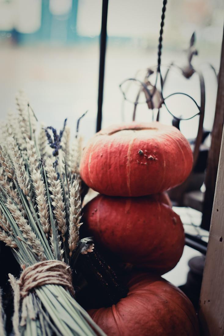 Pumpkin harvest halloween